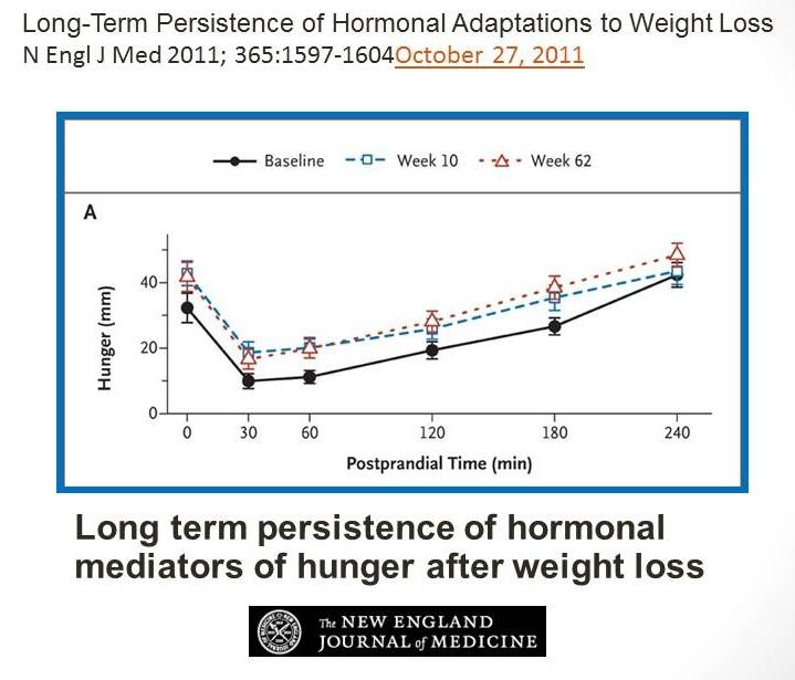Oh My Gut - redukční diety nefungují - graf hormonů hladu
