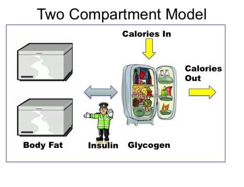 Oh My Gut - Redukční diety nefungují. Inzulín řídí ukládání energie do tuků