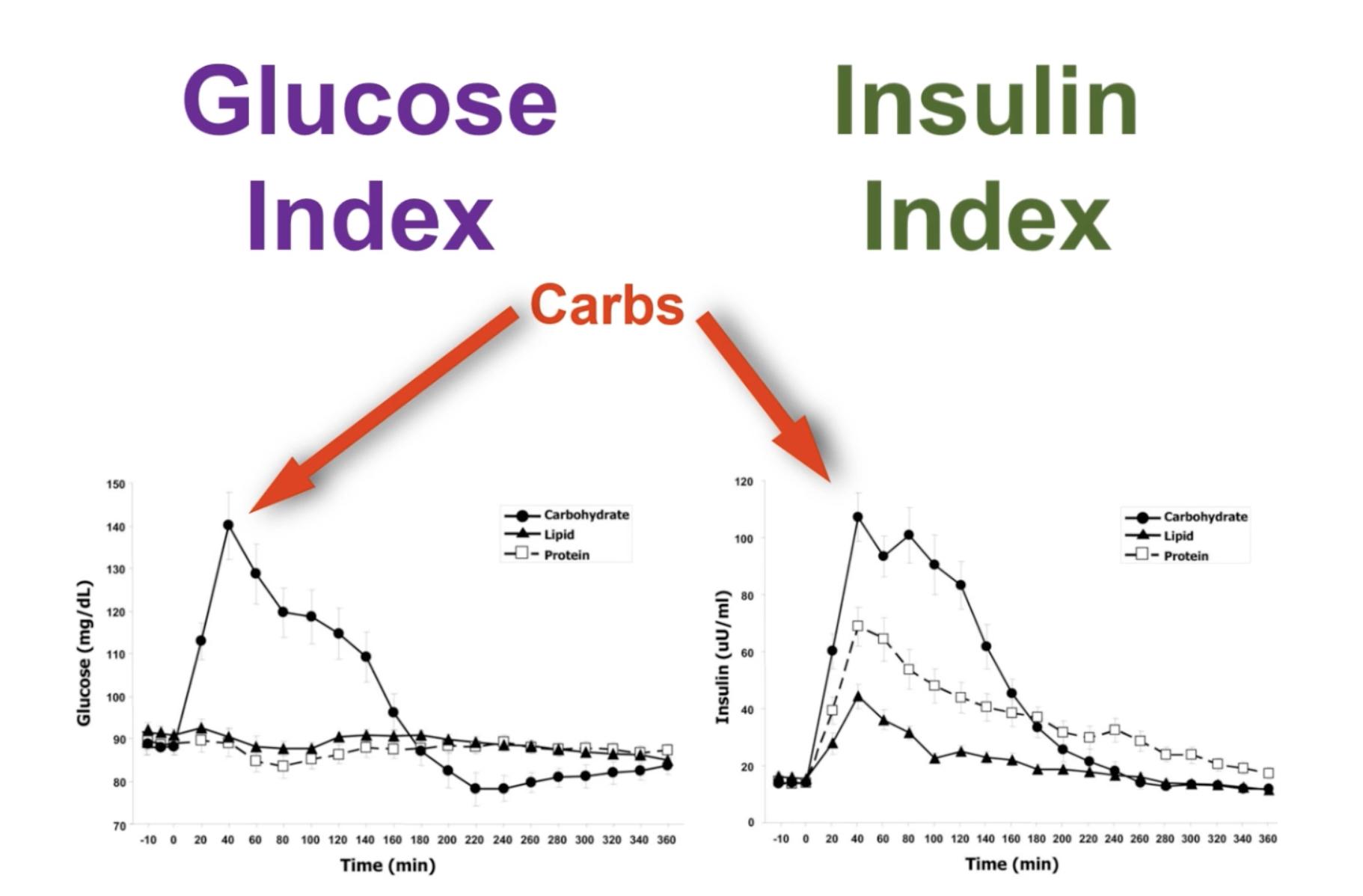 OMG - Glykemický vs. inzulínový index potravin. Problém kalorií